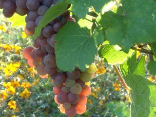 Découvertes oenologiques & gustatives en Bourgogne